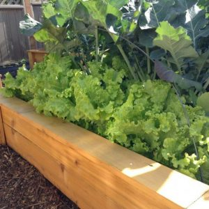 9 Ways Your Family's Health Will Improve When You Garden