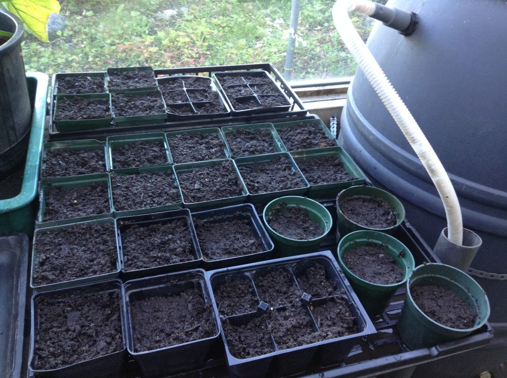 Seeding trays