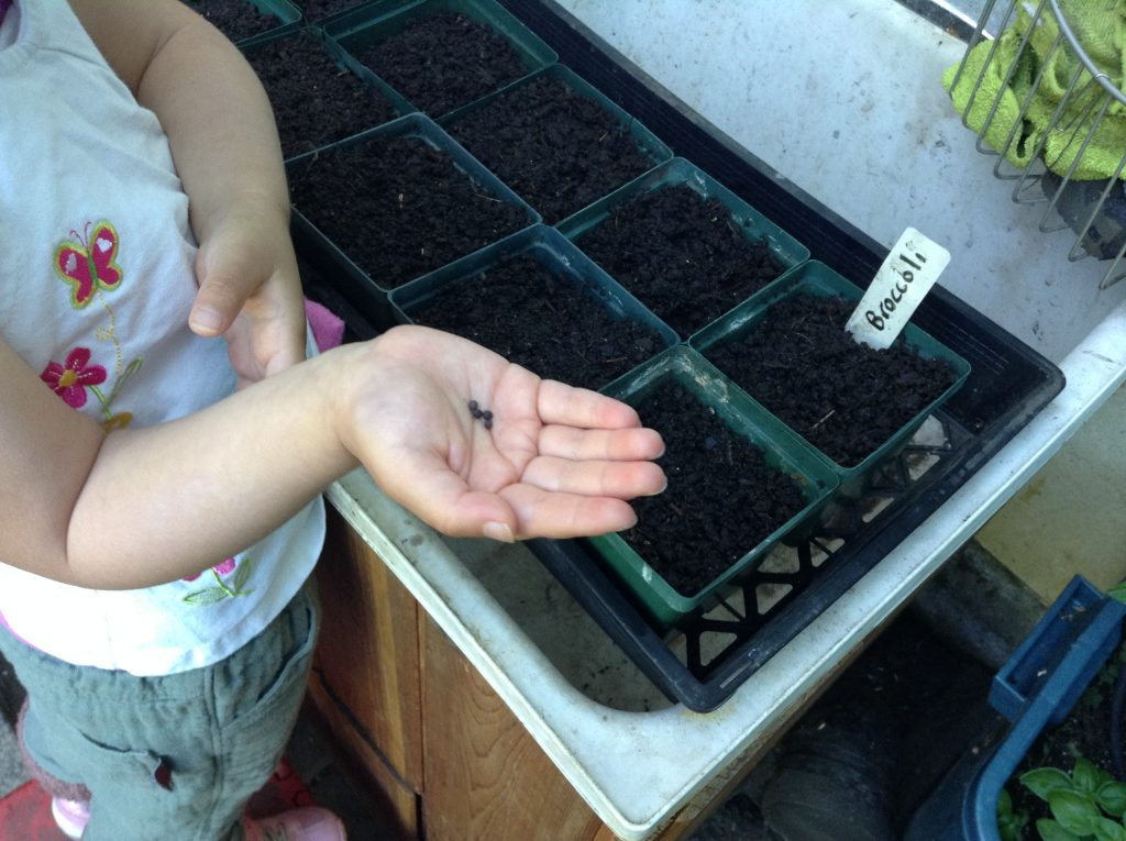 Seeding - small seeds in a small hand