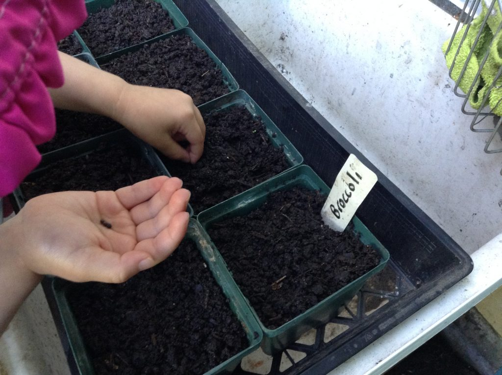 Seeding into the pots