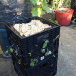 Strawberry Crate