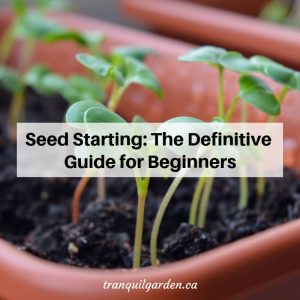 Seed Starting: The Definitive Guide for Beginners