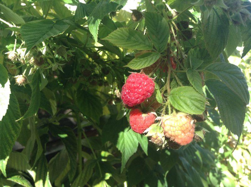 1000 words: Fabulous Fruit Finds
