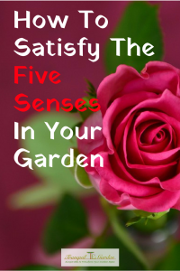 How To Satisfy The Five Senses In Your Garden - Your garden can provide stimulus for the senses of touch, smell, taste, sight and sound by planting the right plants and adding the right elements to your garden