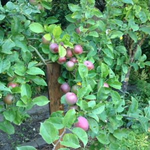 7 important fruit tree planting tips you need to follow