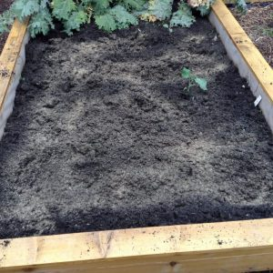 Raised Bed Preparation For Transplanting
