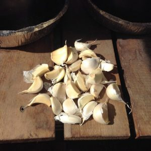 How To Plant Garlic In The Fall For Great Harvests Next Year