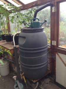 Greenhouse rain barrel
