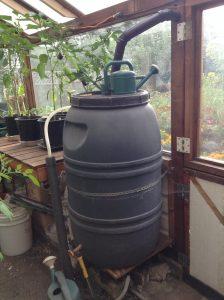 Rain water barrel inside greenhouse