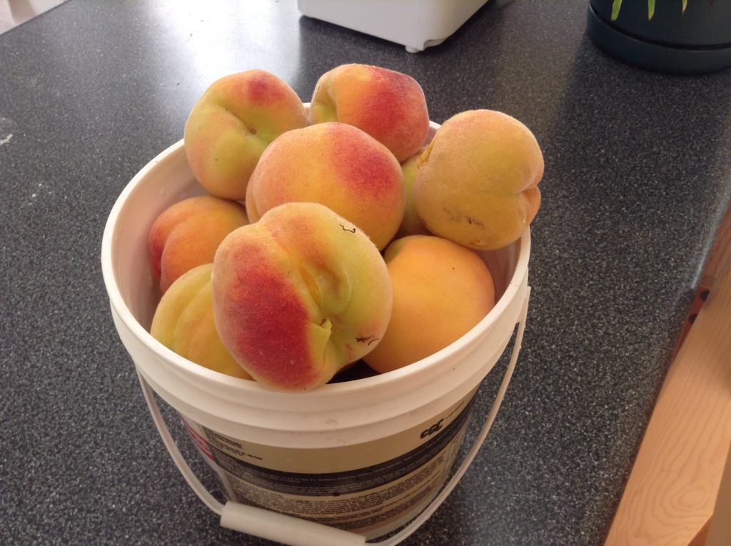 Pail of Peaches