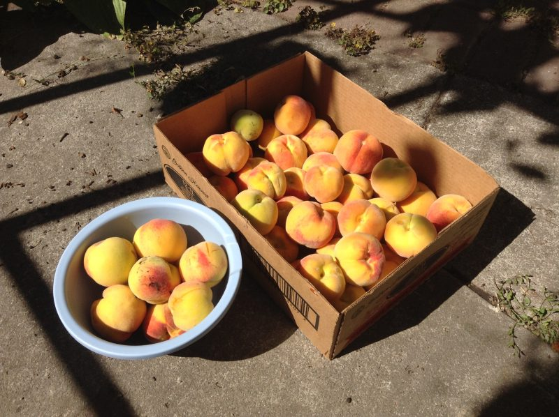 1000 words: Picking Peaches Perfectly