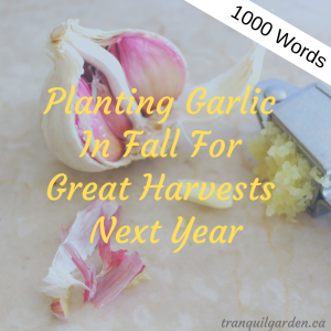 1000 words: Planting Garlic In Fall For Great Harvests Next Year