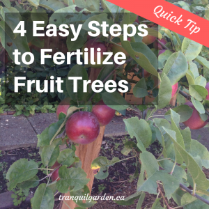 4 Easy Steps to Fertilize Fruit Trees [Quick Tip]