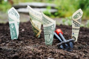 growing money in the garden