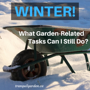 How a Gardener can be Productive in Winter