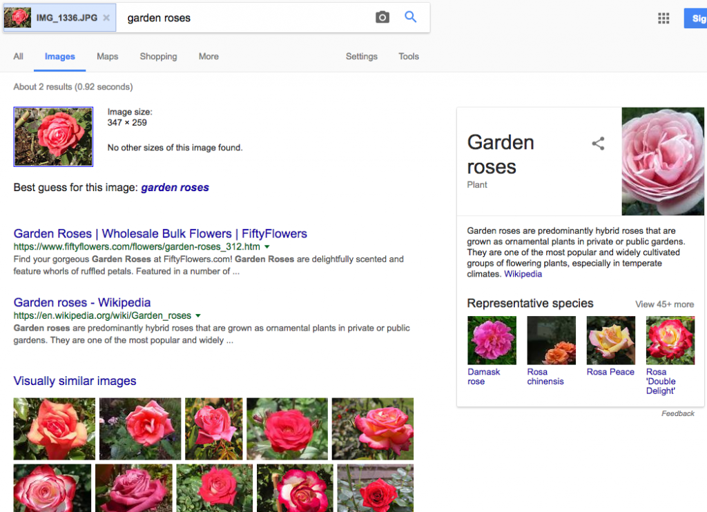 image search for rose
