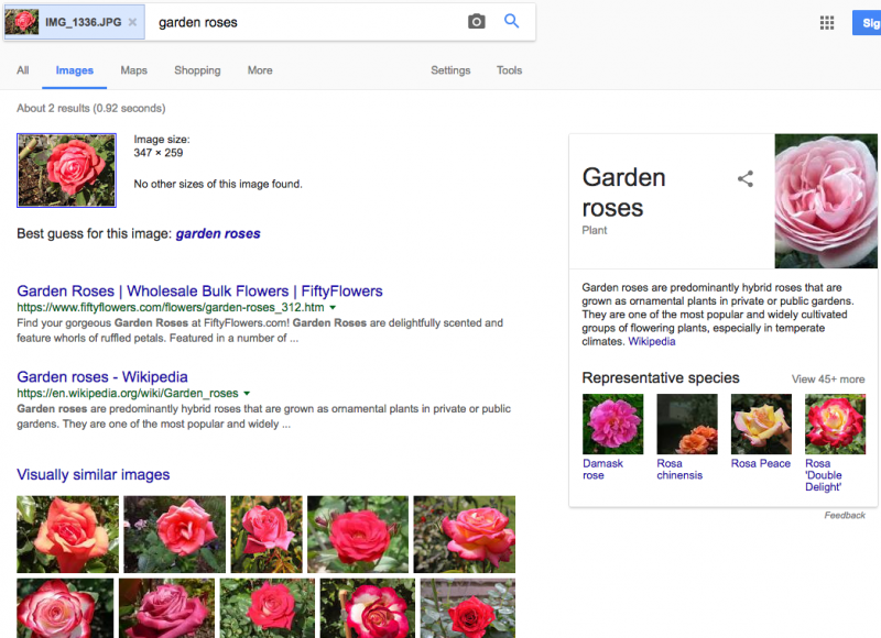 google image search result garden roses