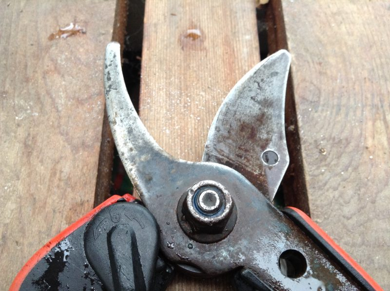 Quick Tip: How to Maintain Pruners