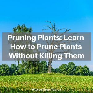 Pruning Plants: Learn How to Prune Plants Without Killing Them