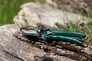 How to Prune Plants Easily and Effectively: Part 1
