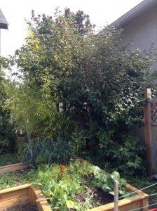 Bush taking over garden