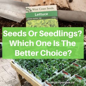 Seeds Or Seedlings? Which One Is The Better Choice?