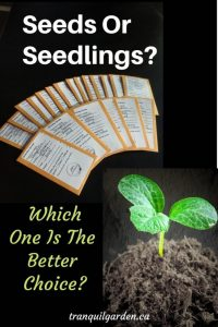 Seed packages and seedling on black background with overlay text