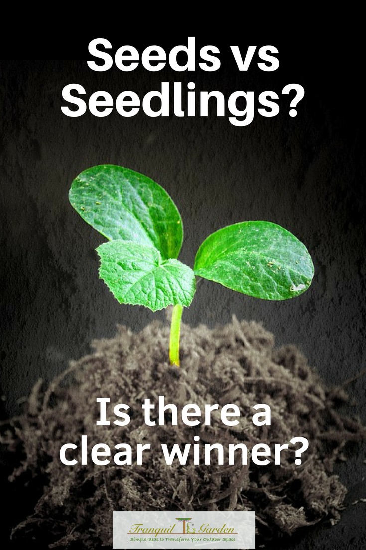 Seeds vs Seedlings? Is there a clear winner? - When you make the decision to start growing your own vegetables, you are confronted with two options: Seeds vs Seedlings. You could buy some seedling plants or buy some seeds to plant yourself. Which one should you choose?