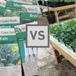 Seeds vs Seedlings? Is there a clear winner?