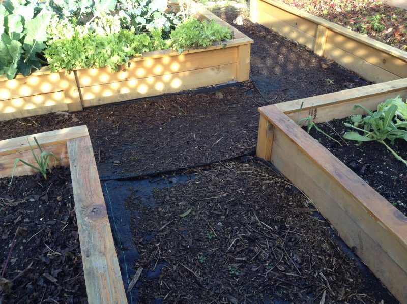 Raised bed paths