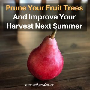 How To Prune Fruit Trees To Improve Your Harvest Next Summer - To get a decent harvest in summer, a bit of preparation work needs to be done on your fruit trees in the fall/winter when the trees are dormant. Learn what to prune and how.