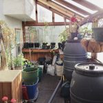 greenhouse cleanup
