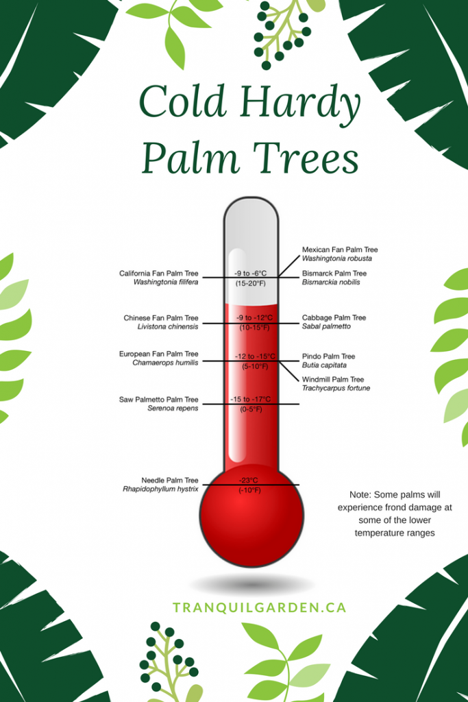 Cold Hardy Palm Trees Infographic