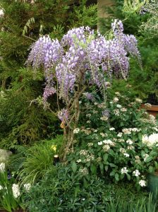 Spring Prelude at the Butchart Gardens (video)