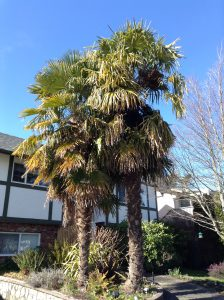 Cold Hardy Palm Trees: Create An Exotic Garden Oasis
