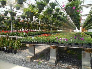 flowers-nursery