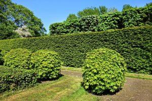 shorn-hedge