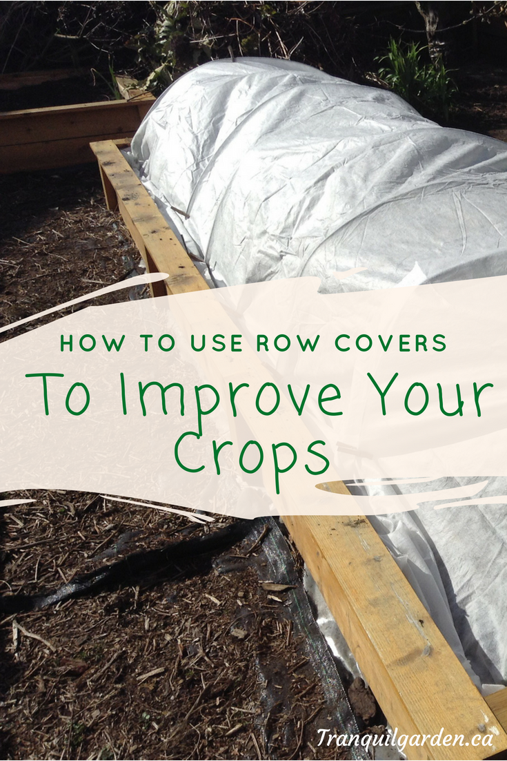 How To Use Row Covers To Improve Your Crops - Row covers offer protection from insect pests, mammal pests and help warm the soil and protect from frost. Learn how to install them properly and when to remove them to allow for pollination and avoid overheating.