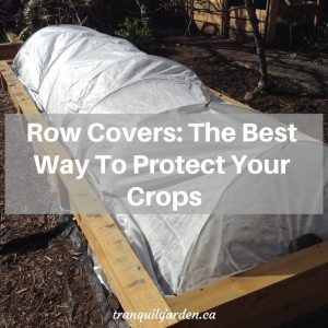 Row Covers: The Best Way To Protect Your Crops