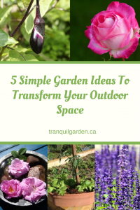5 Simple Garden Ideas to Transform Your Outdoor Space - Add Fragrant Flowers, Herbs, A Container Water Garden and a Salad Container Garden. Great ideas for a Balcony, Patio or Townhouse small garden. Improve your garden on a budget in less time with less work.