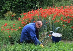 The Best Time To Weed Your Garden