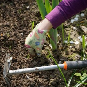 The Best Time To Weed Your Garden: Natural Weed Control Made Easier