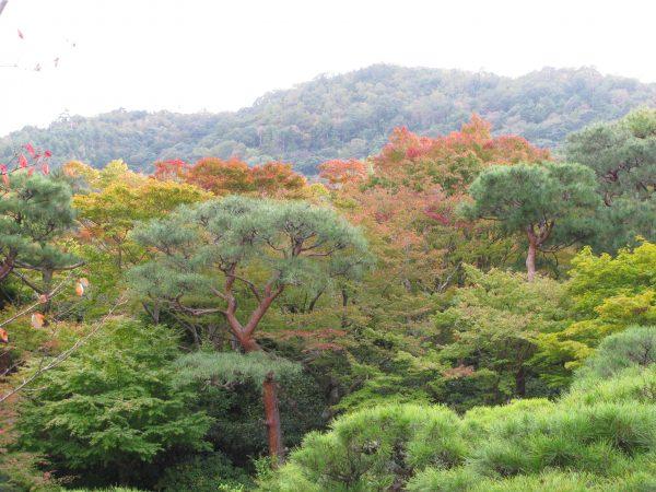 Japanese Garden Borrowed Scenery