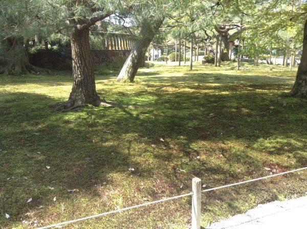 Japanese Garden Groundcover