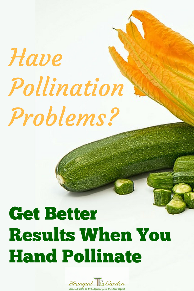 Got Pollination Problems? Get Better Results When You Hand Pollinate