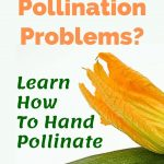 Pollination Problems?