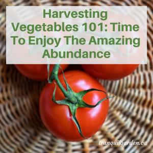 Harvesting Vegetables 101: Time To Enjoy The Amazing Abundance