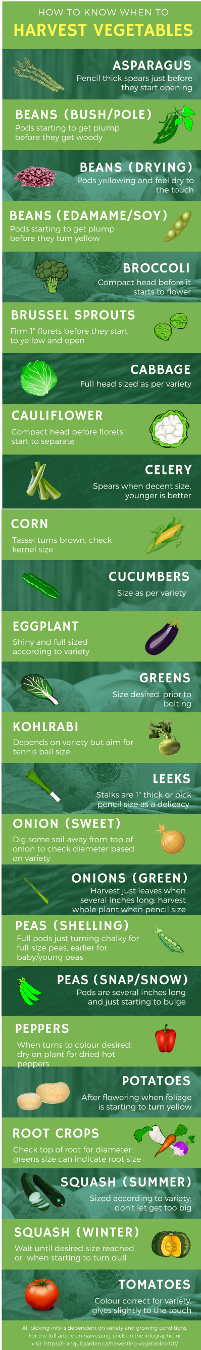 Infographic - When to Harvest Vegetables