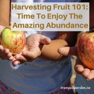 Harvesting Fruit 101: Time To Enjoy The Amazing Abundance