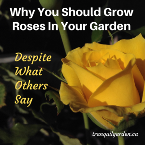 Why You Should Grow Roses In Your Garden Despite What Others Say